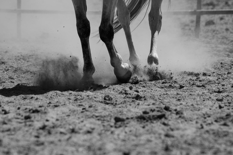 WEB-Foals-Madera-61.jpg