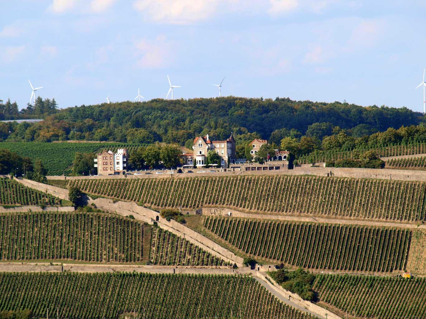 Würzburger Stein  vineyard with the Steinburg Hotel and Restaurant on top