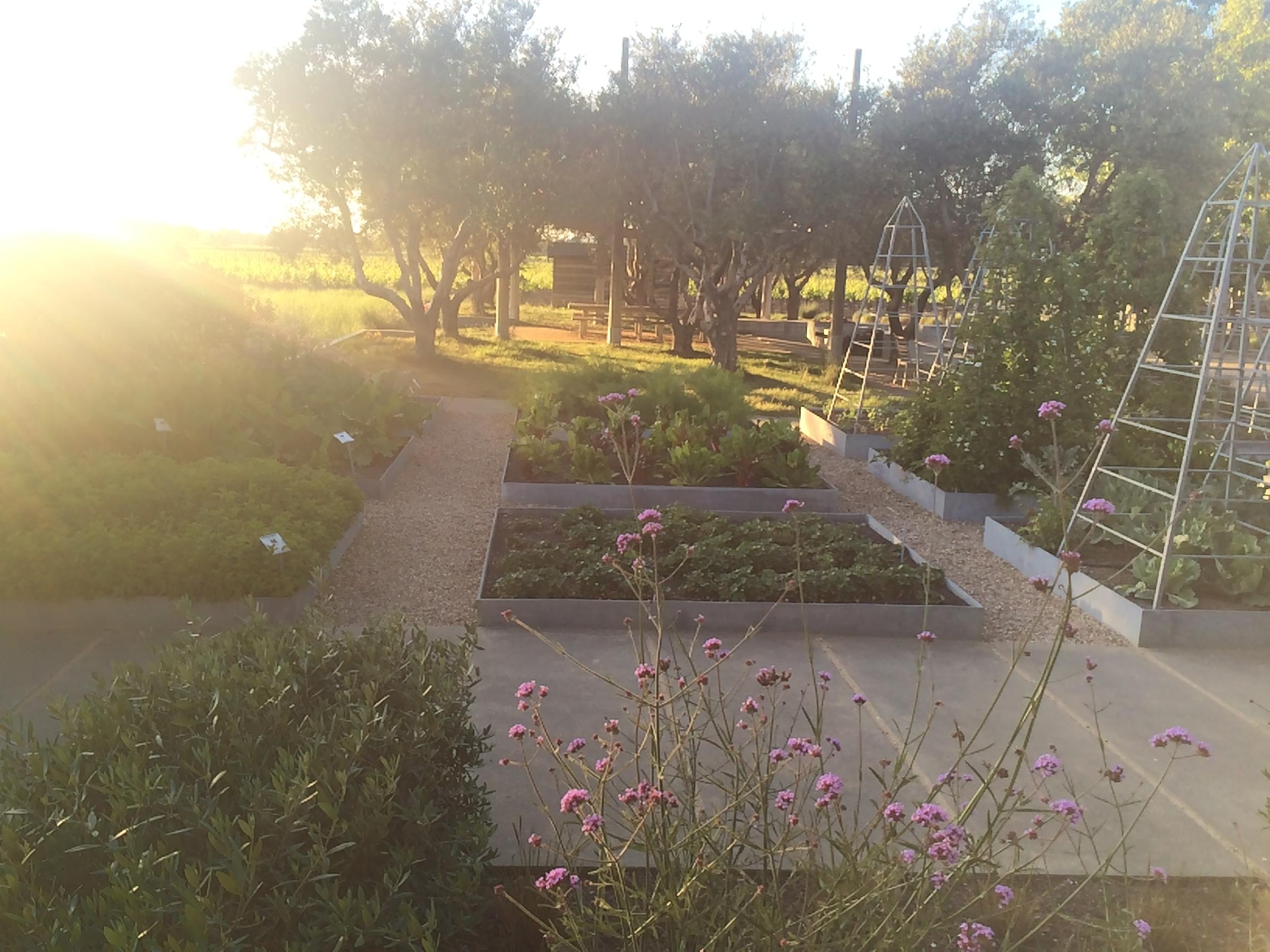 Raised garden beds at  Medlock Ames  - Photo credit Leslie Rosa