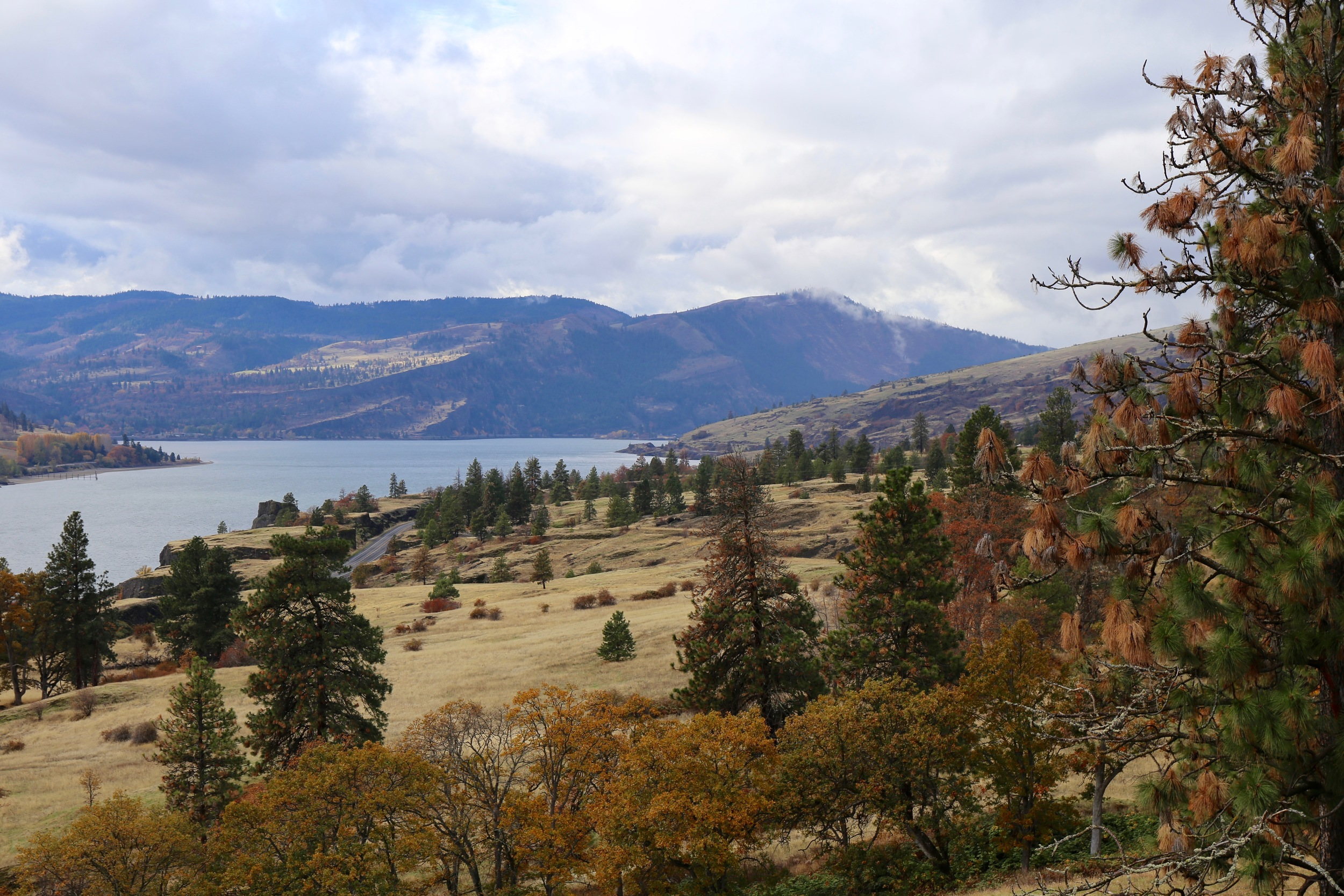 A view from Highway 8 in the Columbia Gorge AVA