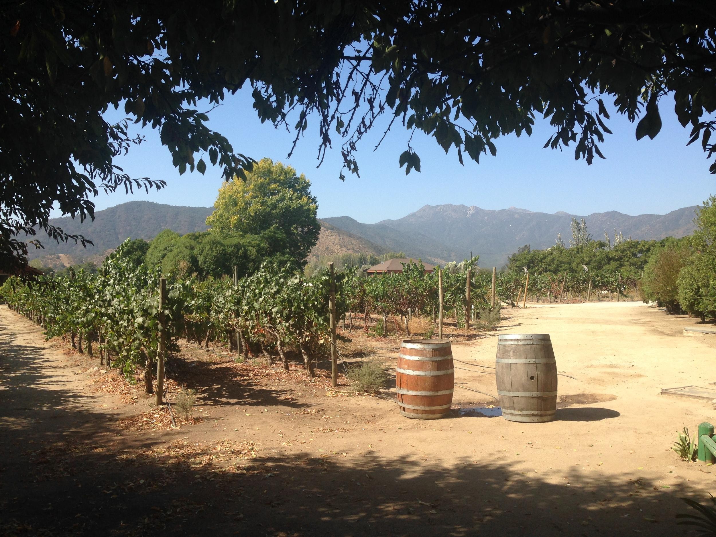 Vines in the Casablanca Valley. Credit   Gabe Manzo