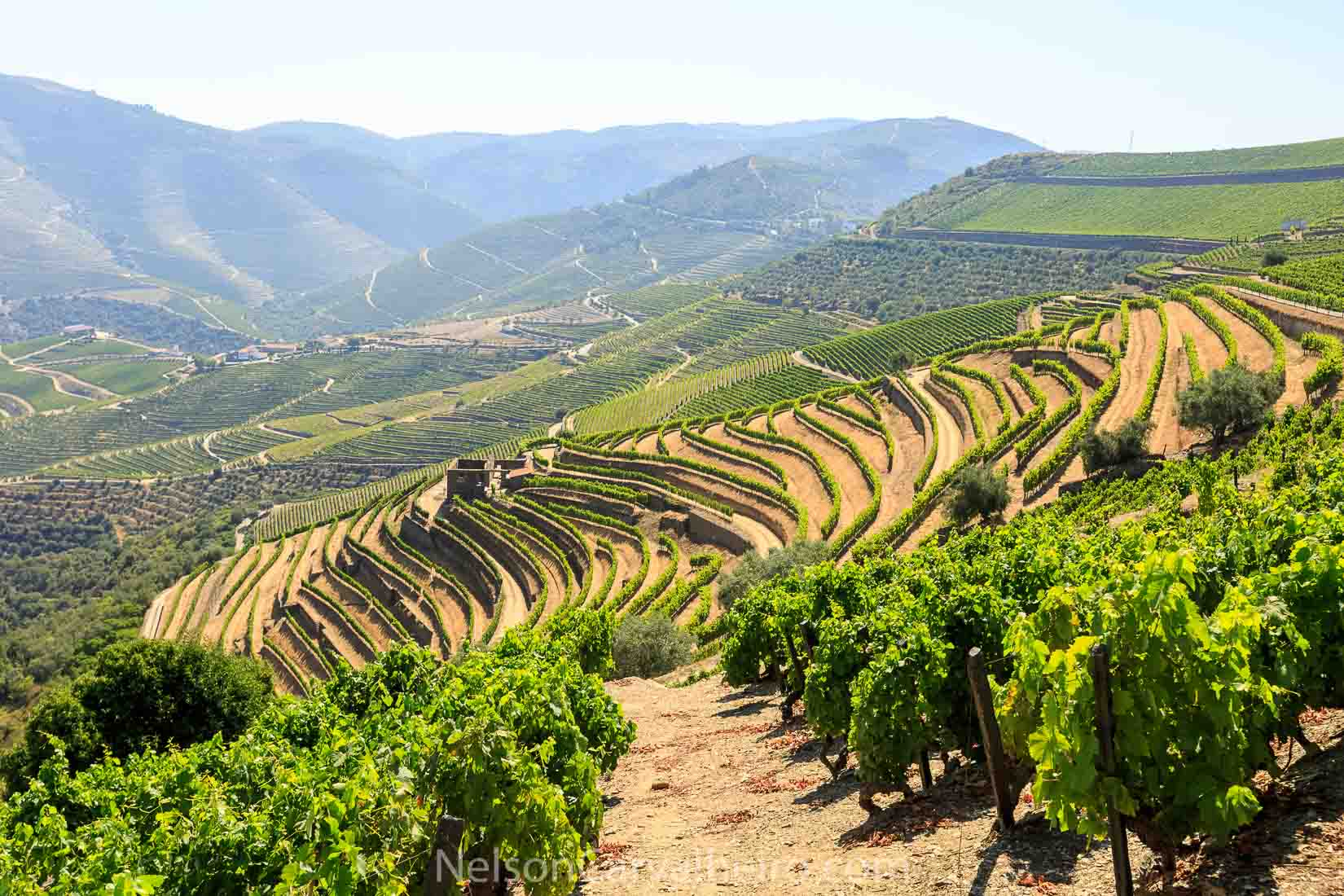 Douro Quinta da Carvalhas | Photo by: Nelson Carvalheiro