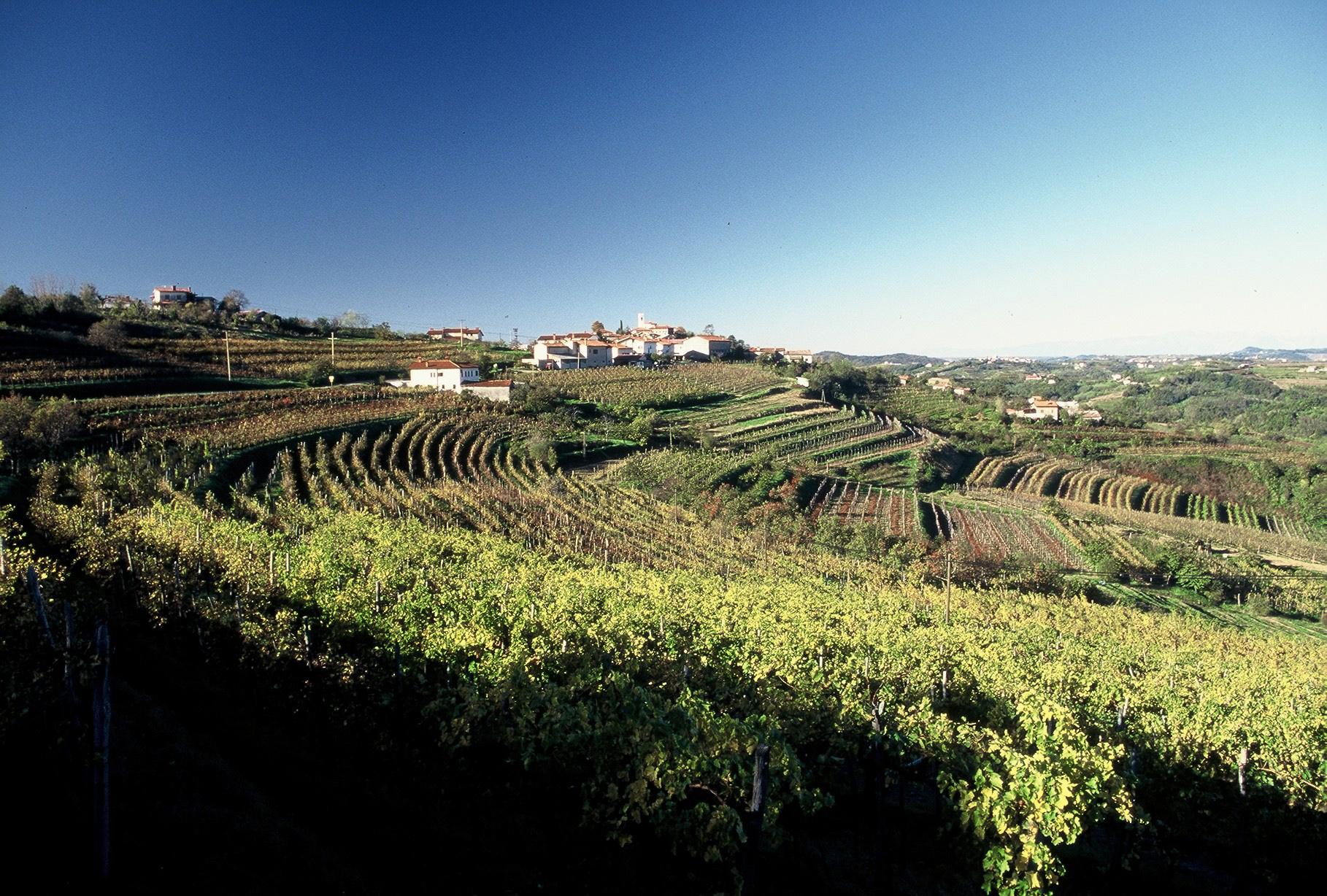 Marjan Simcic Vineyards