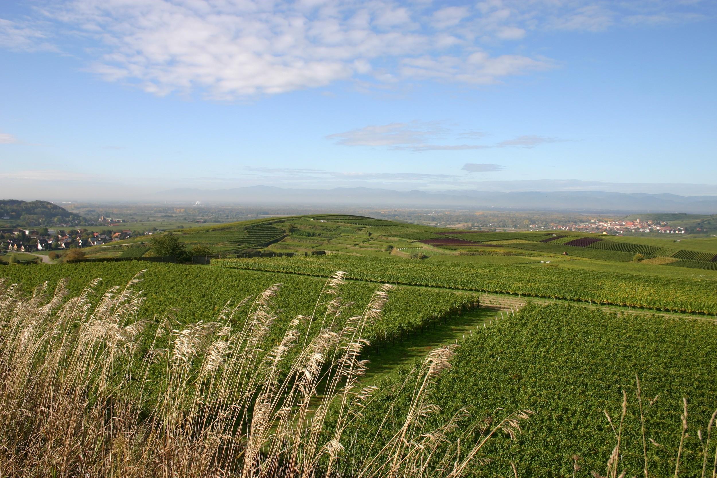 Johner-Weingut Vineyards