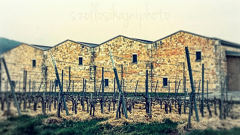 Sauska Winery in Villány, One of the biggest, 61 ha, 540.000 bottle each year.
