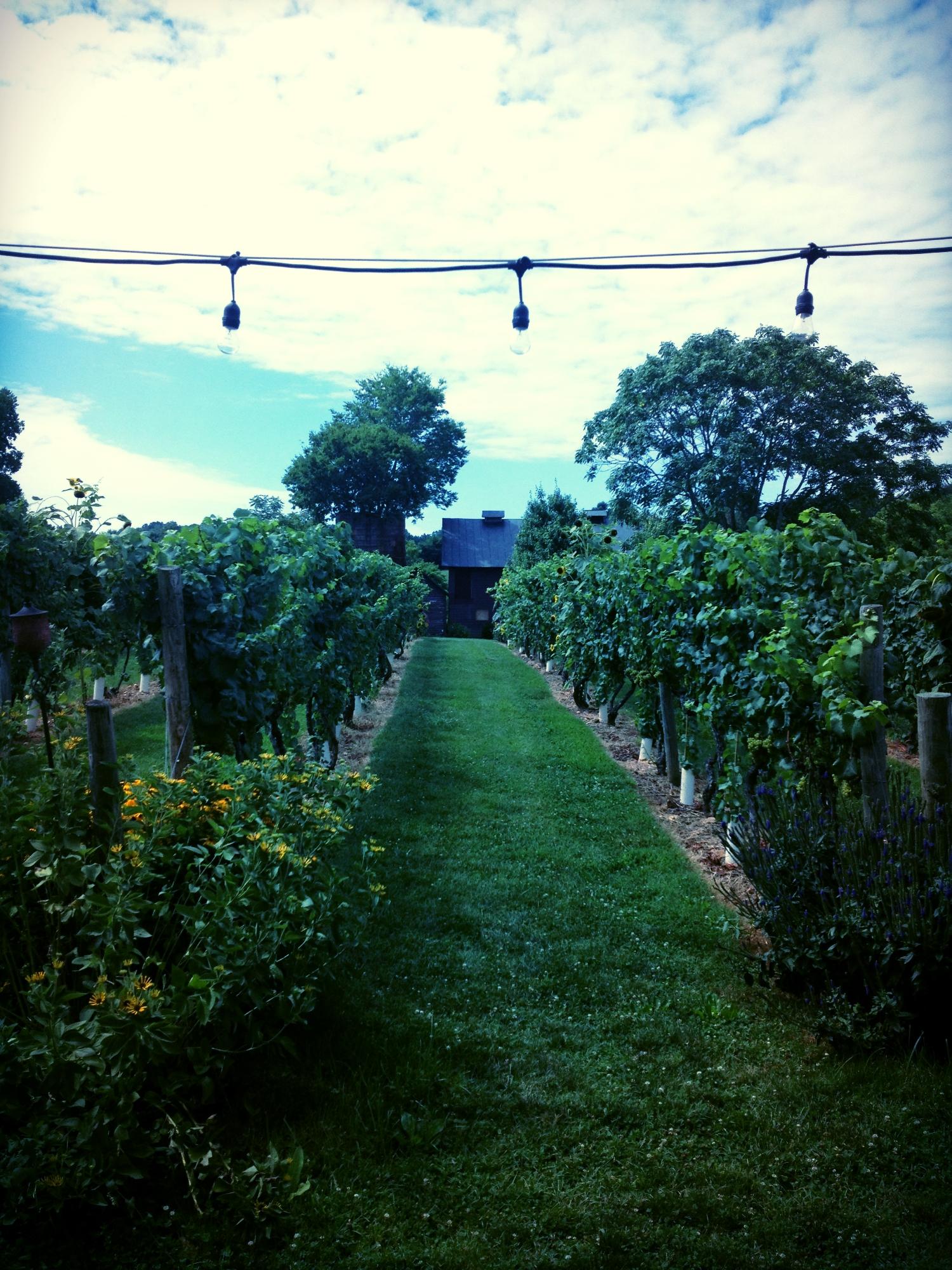 Sips in the Vineyard.