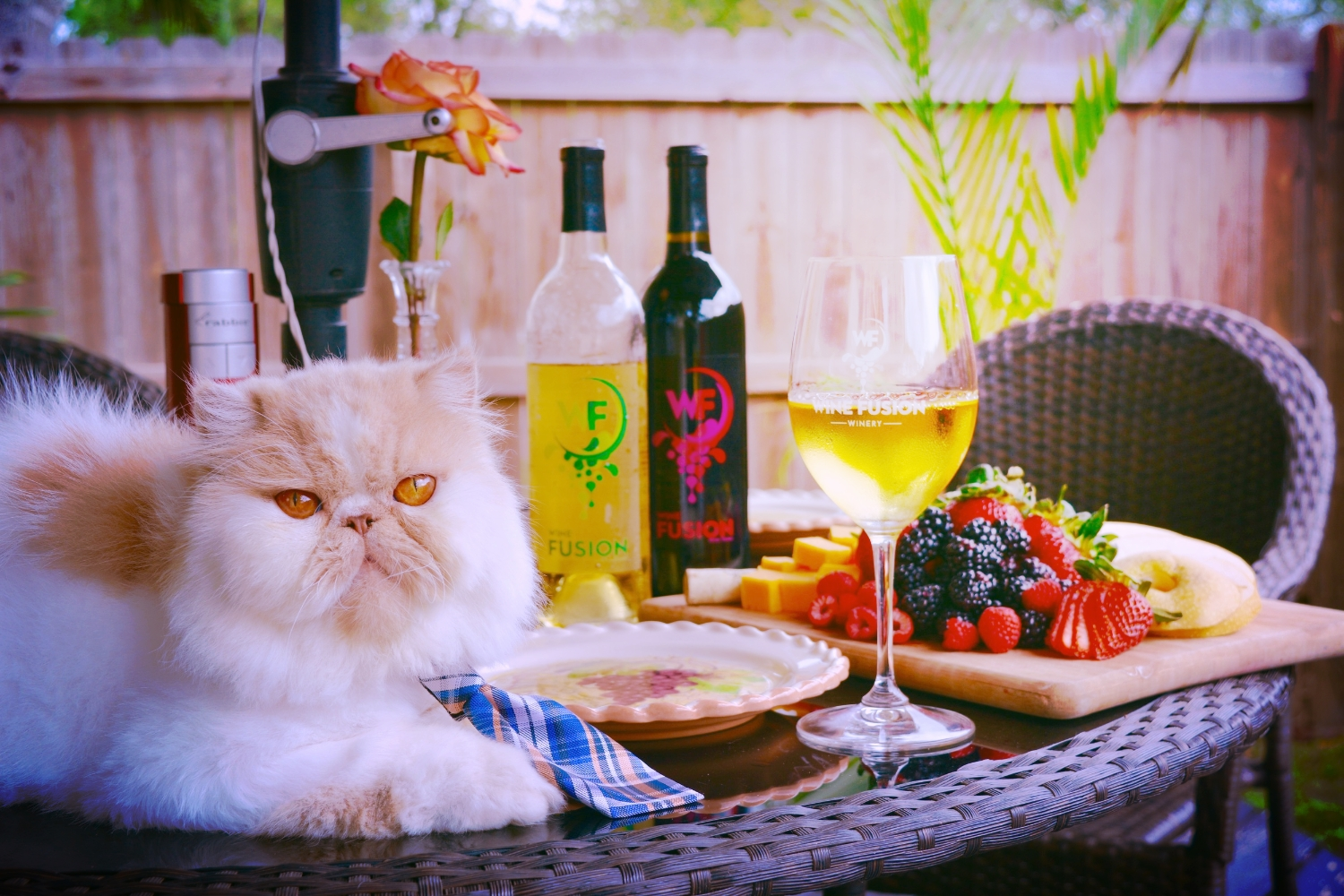 My cat and I have the same taste in wine.