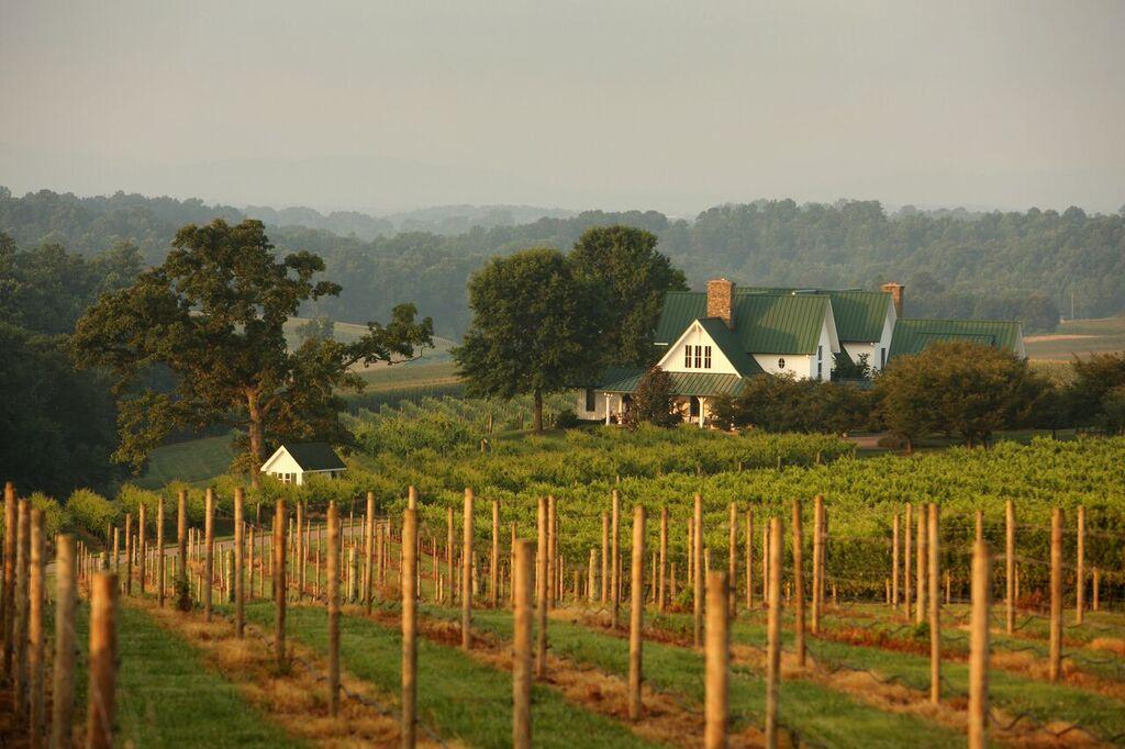 The Beautiful View of Shelton Vineyards