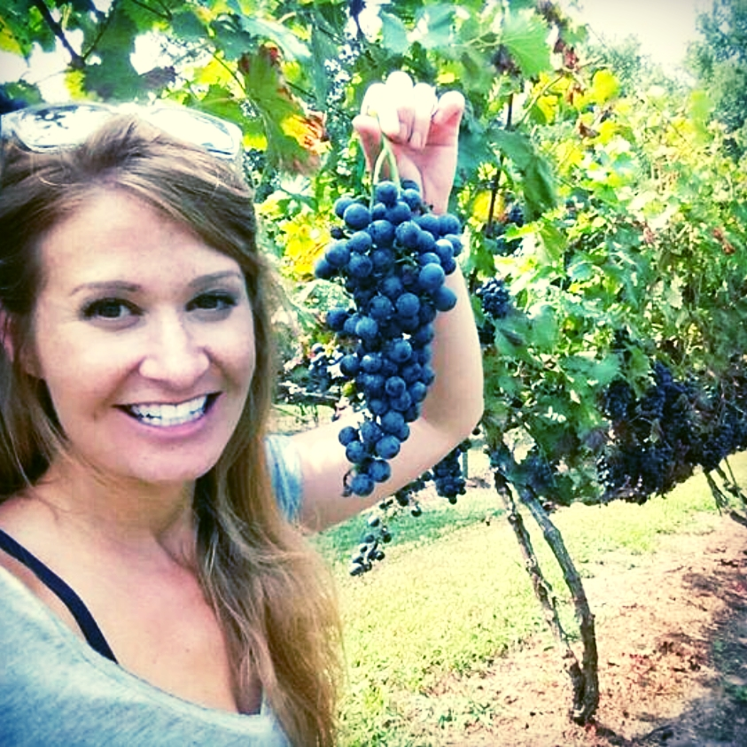Lauren Y. Zimmerman checking grapes before harvest.