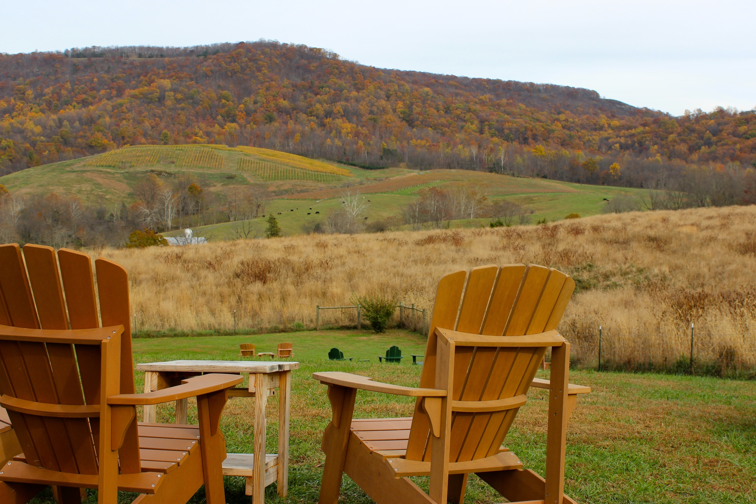 On a fall day, at Glen Manor Vineyards