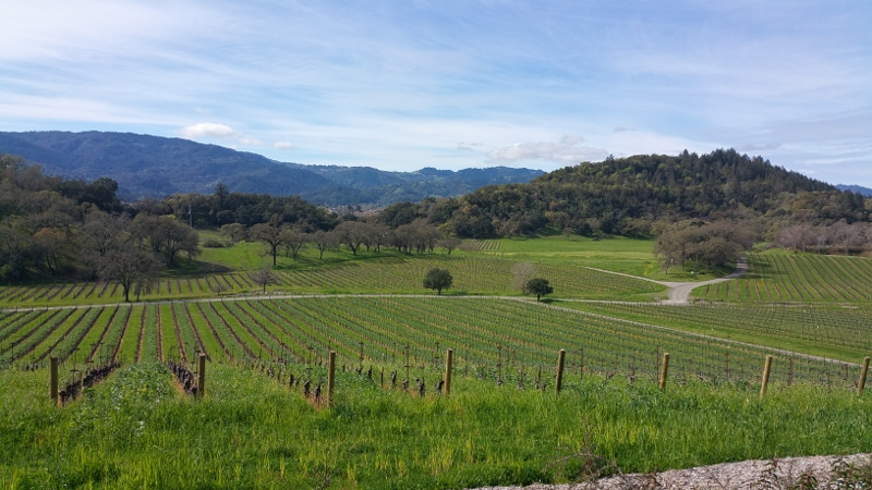 View of the vines at Joseph Phelps Vineyards