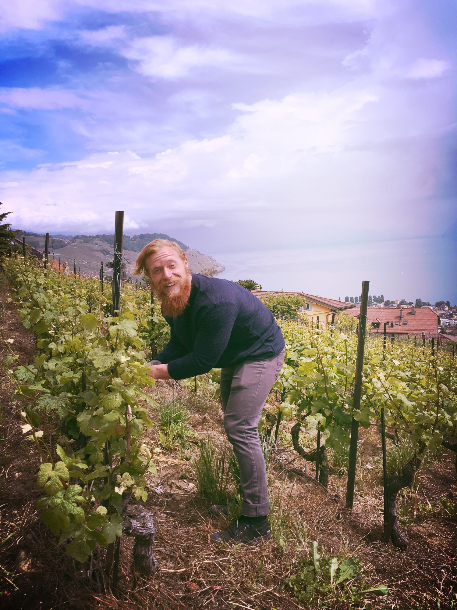 Couldn't help myself from investigating the training methods of the vines!
