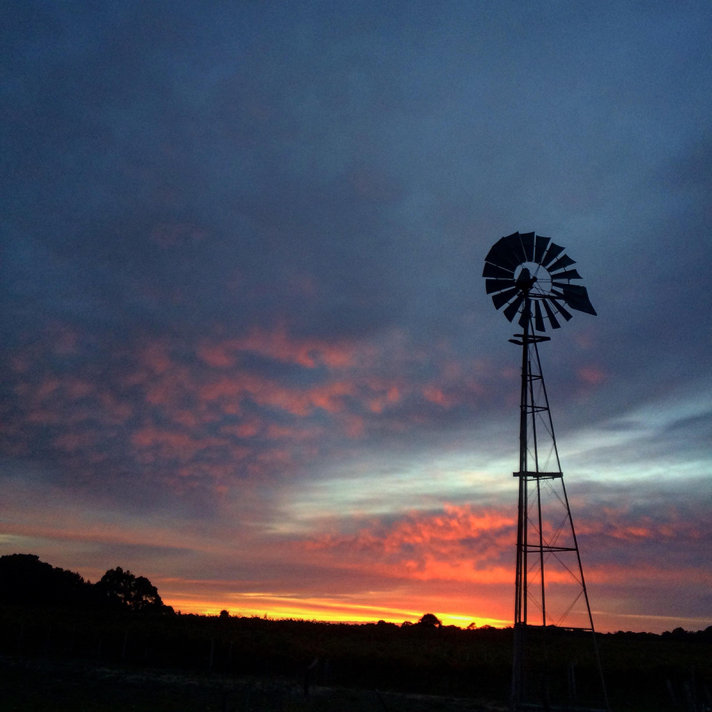 Sunrise over 12 Mile Vineyard in Robe, South Australia.