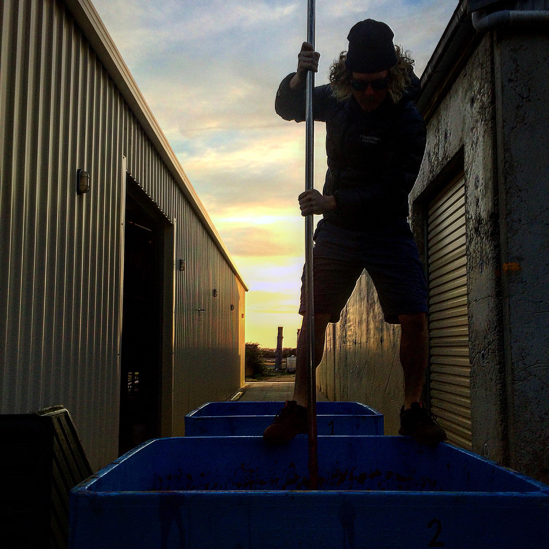 Sybaritewino, dawn patrol punch down at the 12 Mile Vineyard, Robe, South Australia.