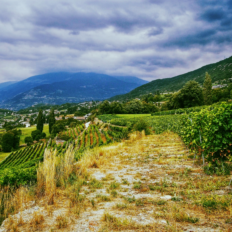 Grosjean vineyards beneath Monte Cervino (the Matterhorn).