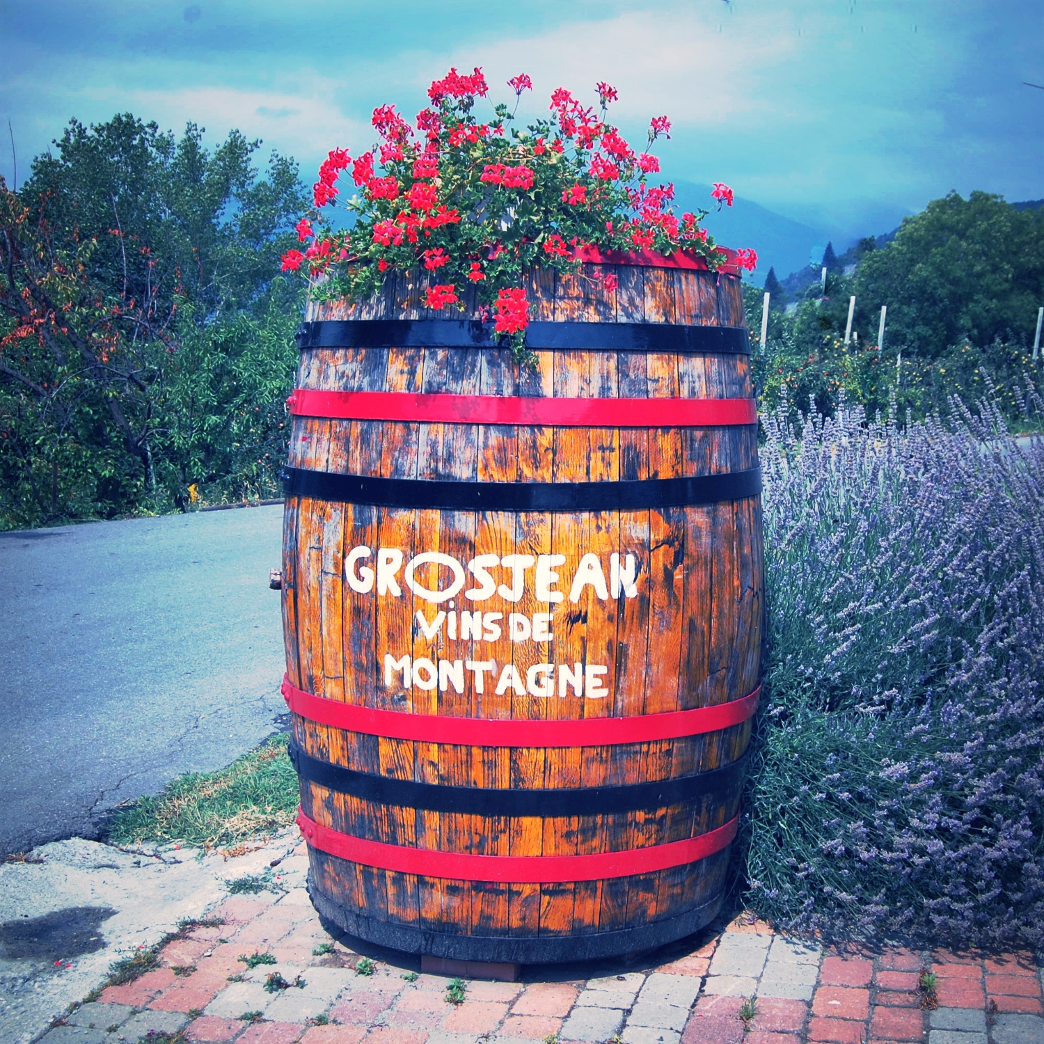 Arriving at Grosjean Freres, Aosta, IT (thank goodness for GPS). The Grosjean winery is located in the foothills of the Italian Alps. We plugged their GPS coordinates into our machine and bumped along a lot of unmarked roads before we saw this colorful wine barrel that indicated we'd found the right place.