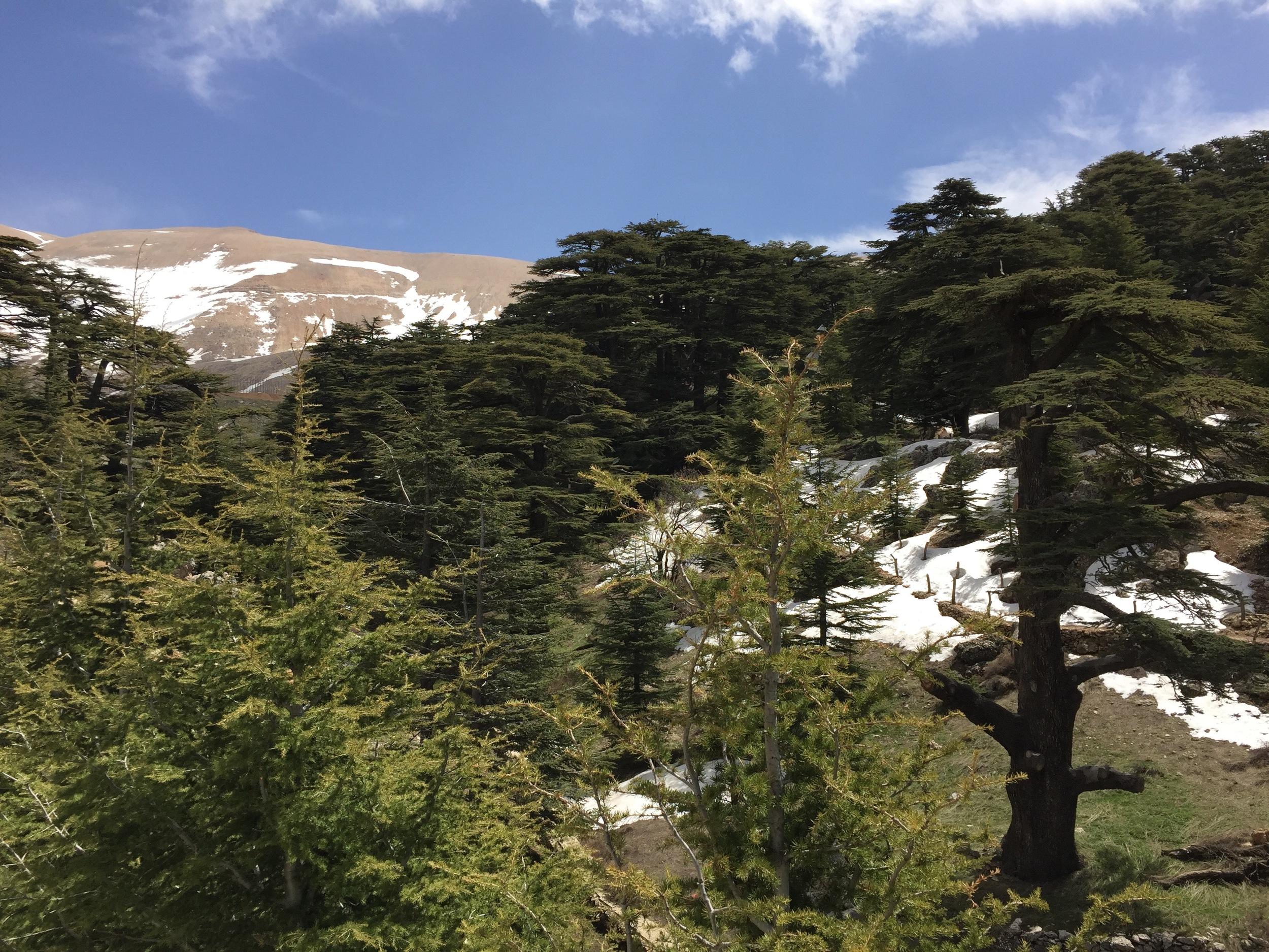 Trek the Cedars of God forest..jpg
