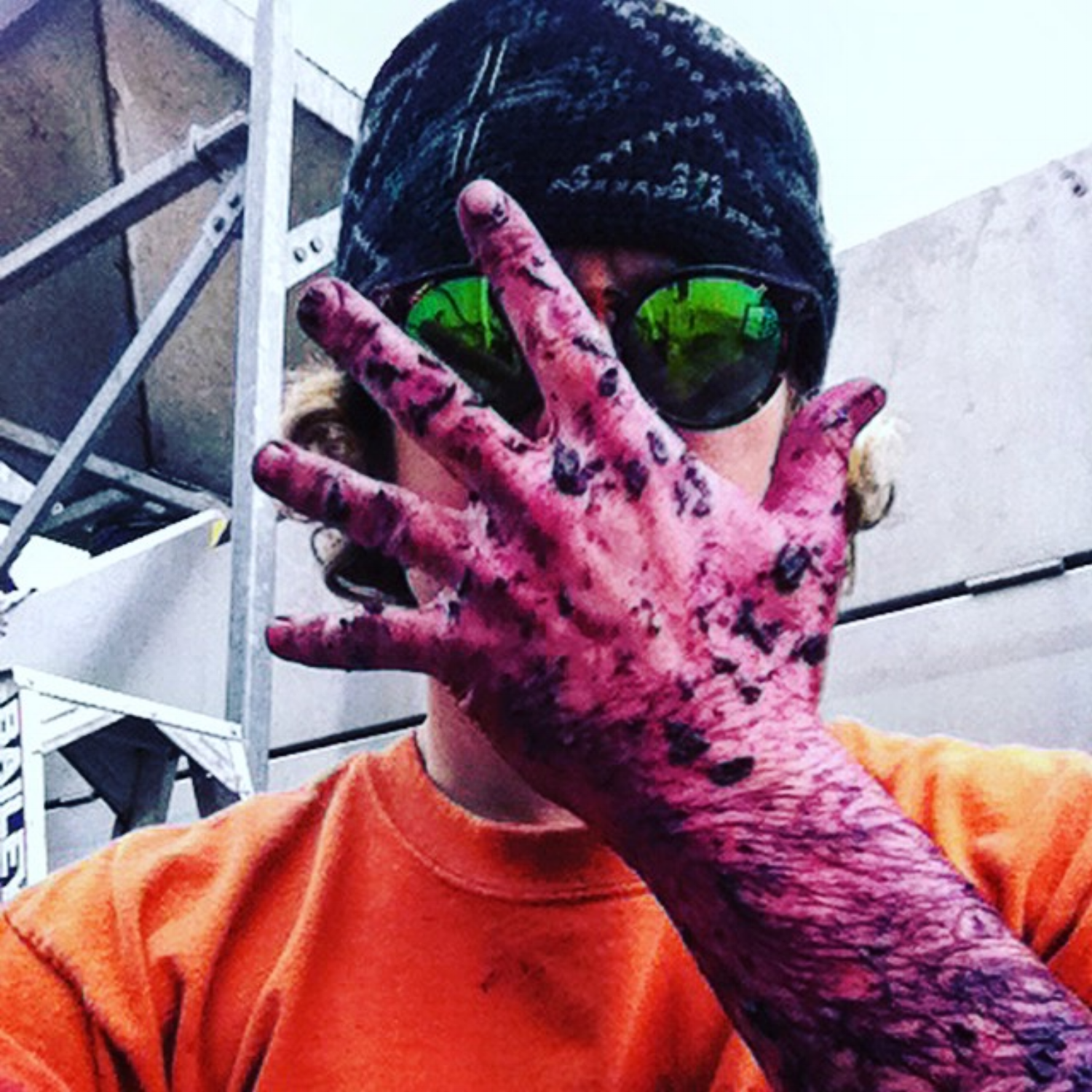 Pressing matters. Sybaritewino's Shiraz stained arm after filling the press.