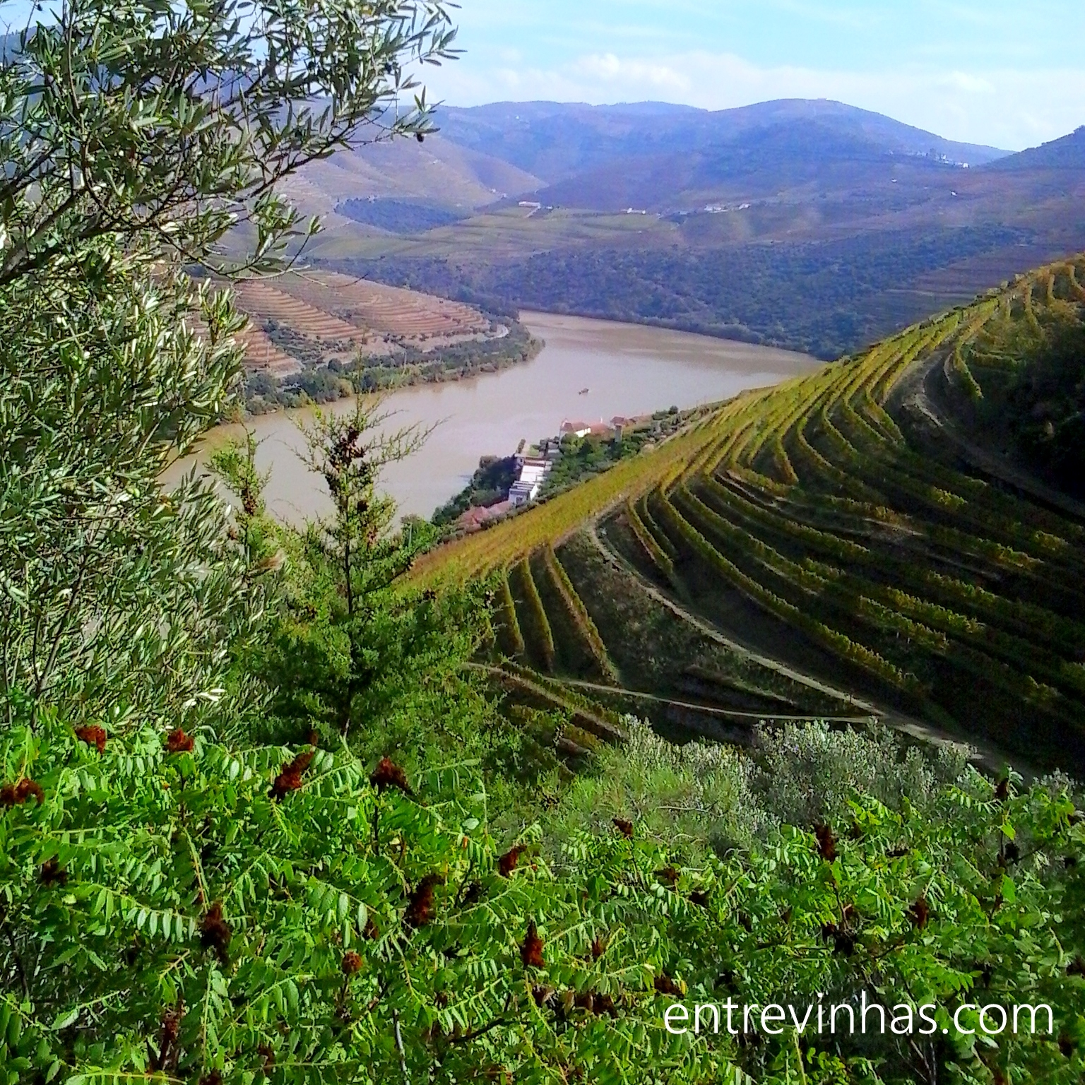 Douro Valley terraces
