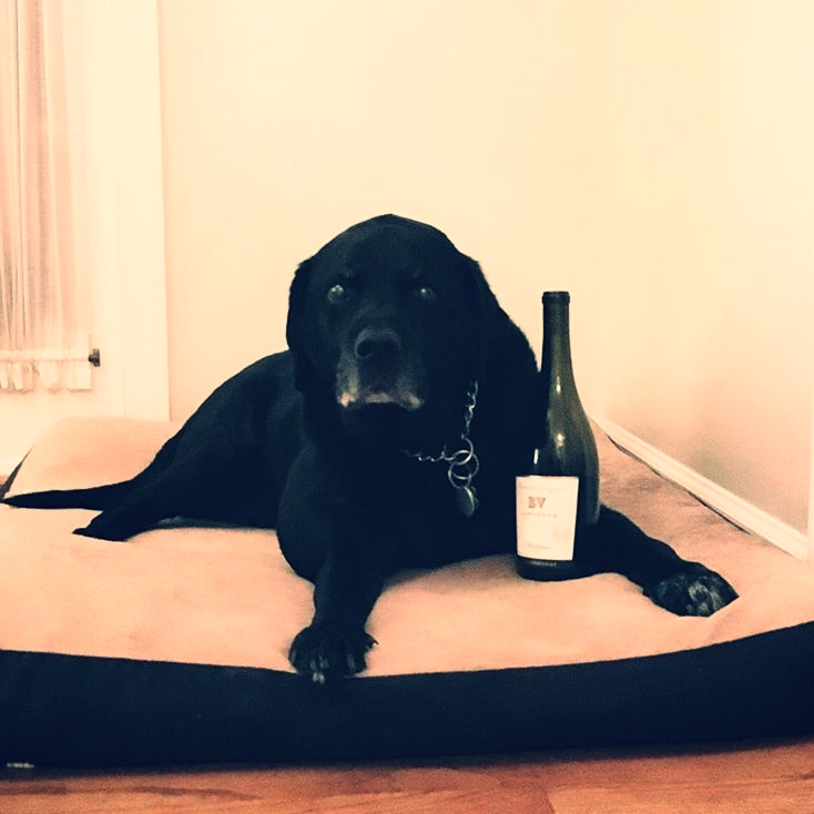 Though I've had a plethora of great wine-drinking companions, my dog has always been my number one.