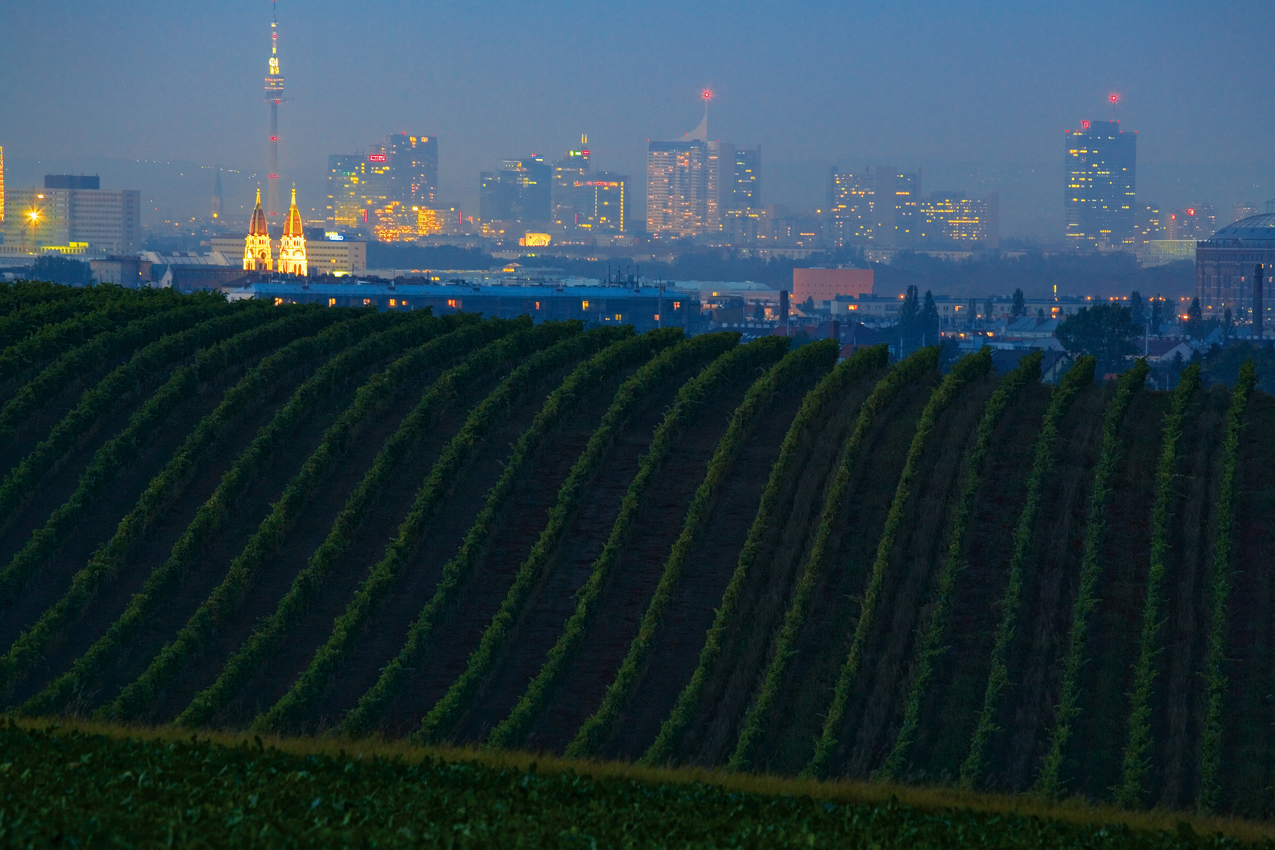 Nighttime Shot of a Vineyard and the City of Vienna