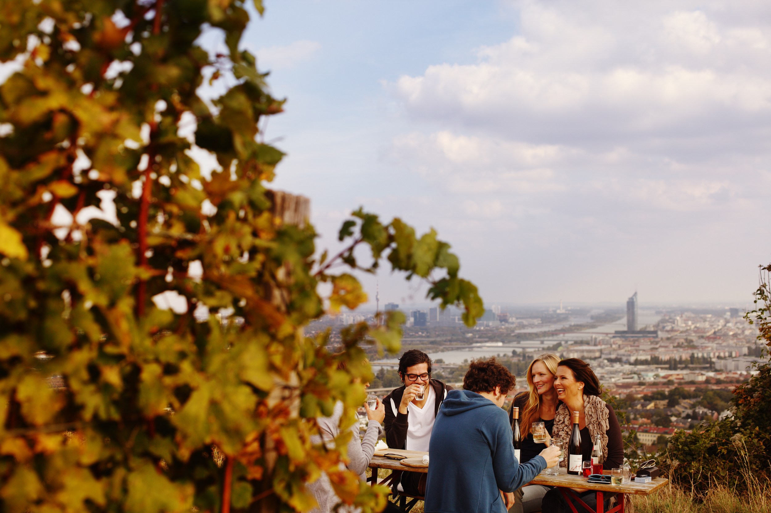 Wieninger vineyard 1.jpg