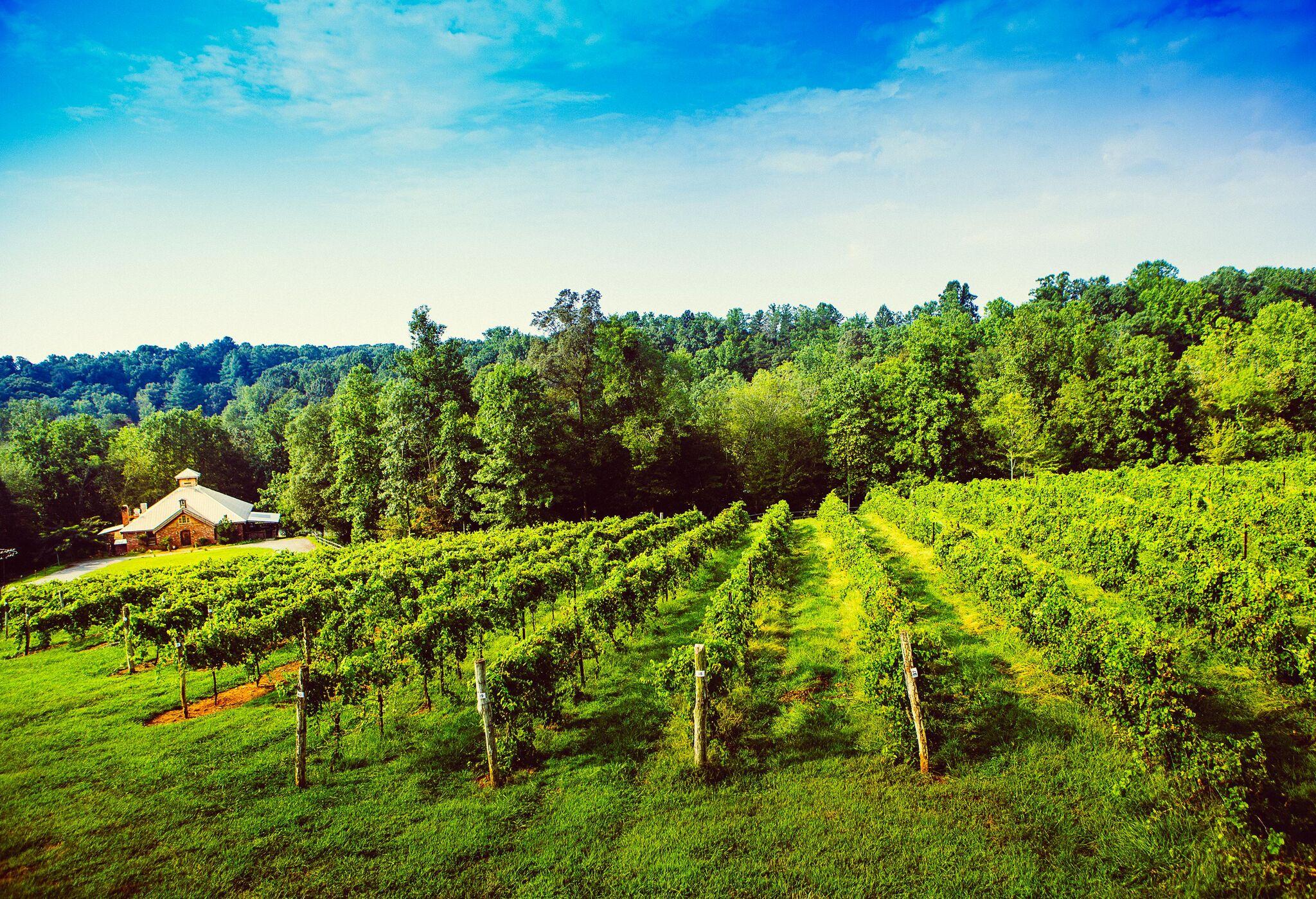 Elkin Creek Vines | Photo Credit: Surry County Tourism