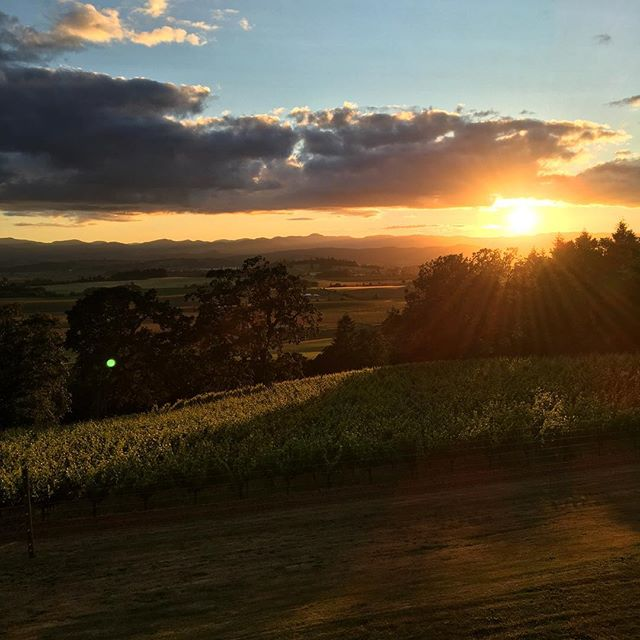 A beautiful sunset at Belle Pente | Photo Credit: Belle Pente Vineyard and Winery