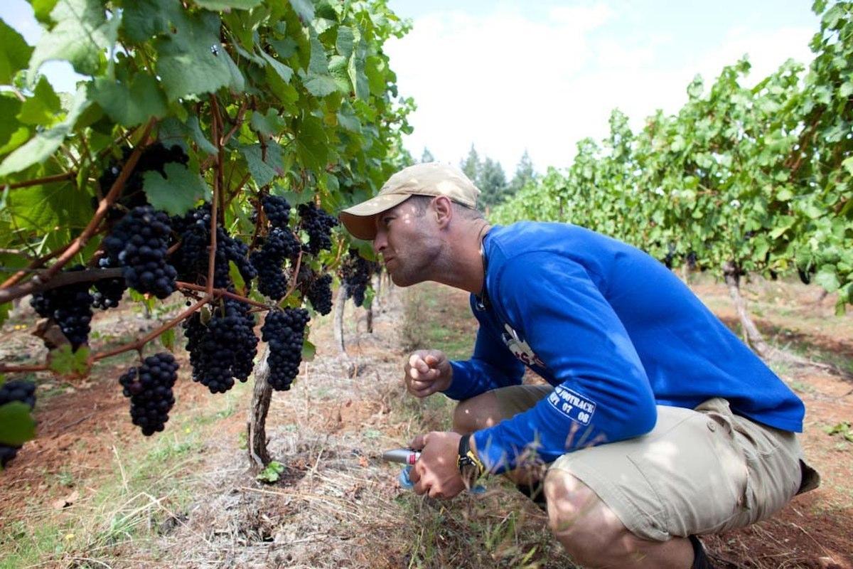 Jesse Lange in Vineyard | Photo Credit: Lange Estate Winery