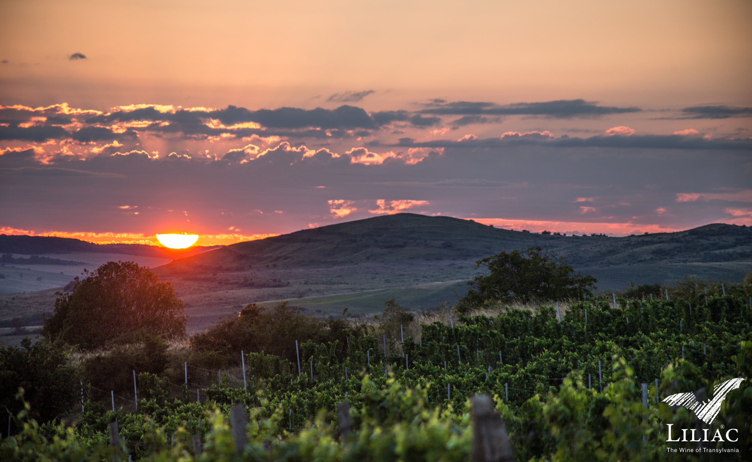 Sunset above the vines | Photo Credit: Liliac
