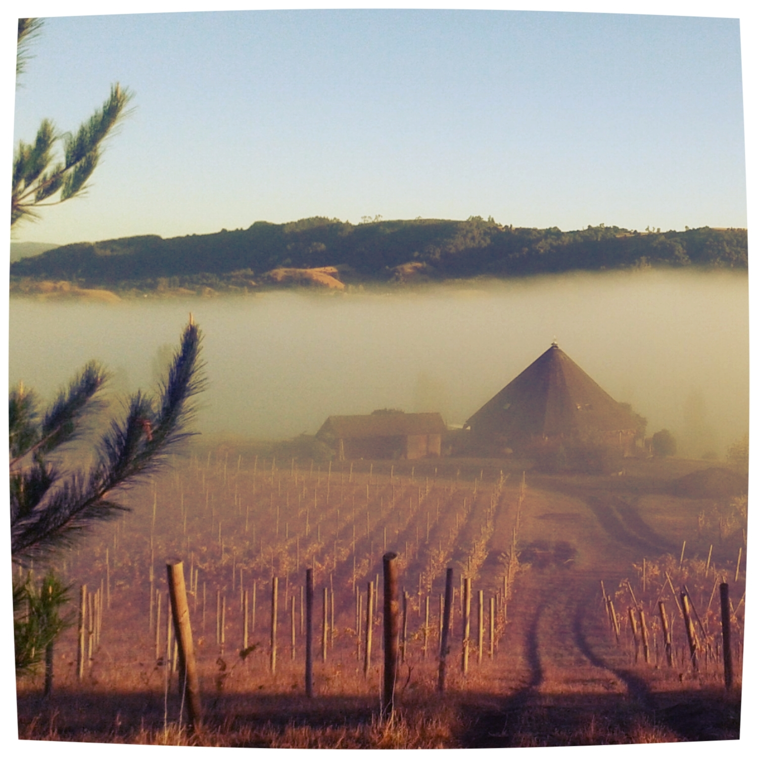 Misty early morning for our first harvesting day at Coteaux de Trumao, Northern Patagonia, Chile