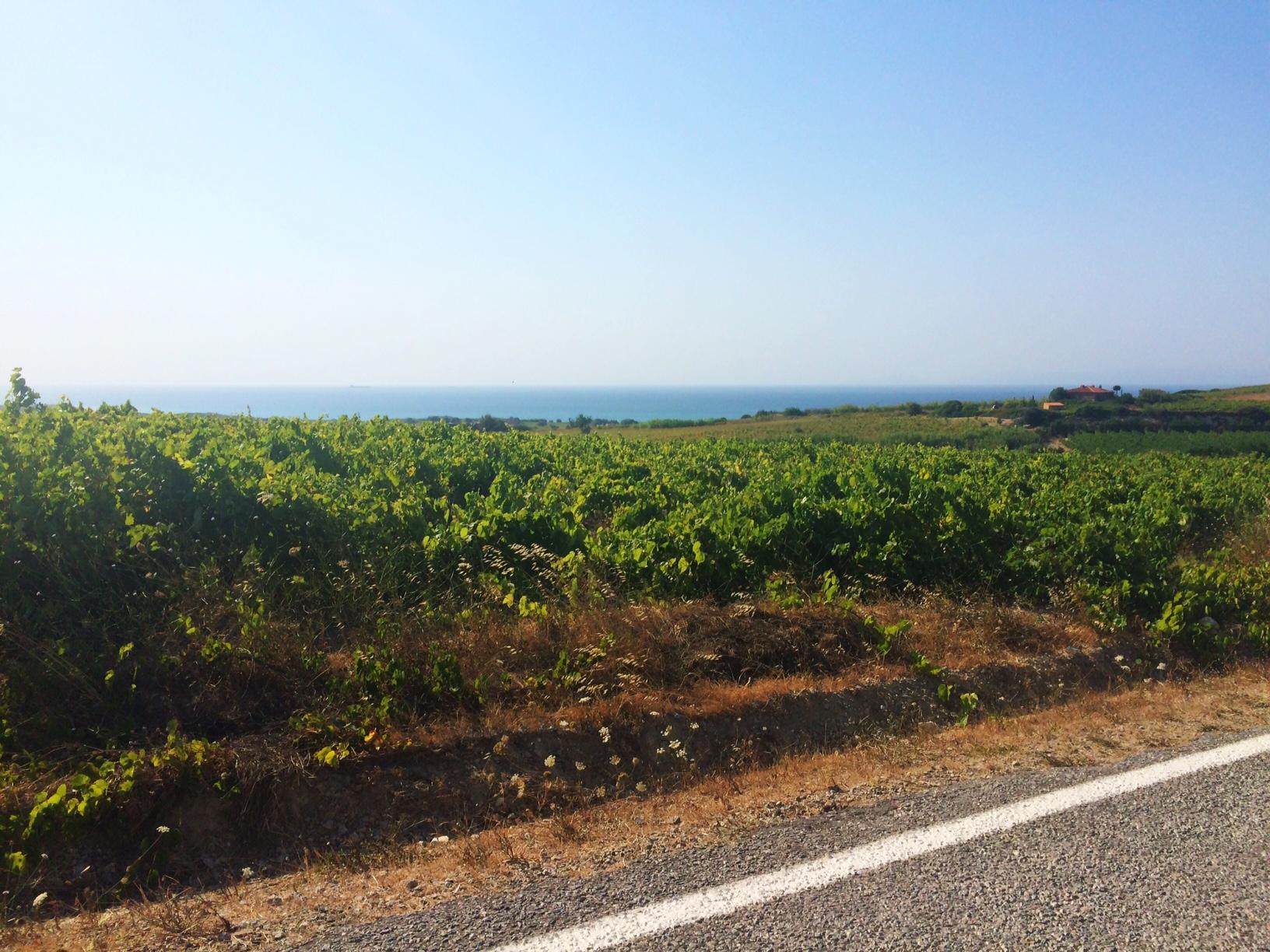 Bozcaada vineyard