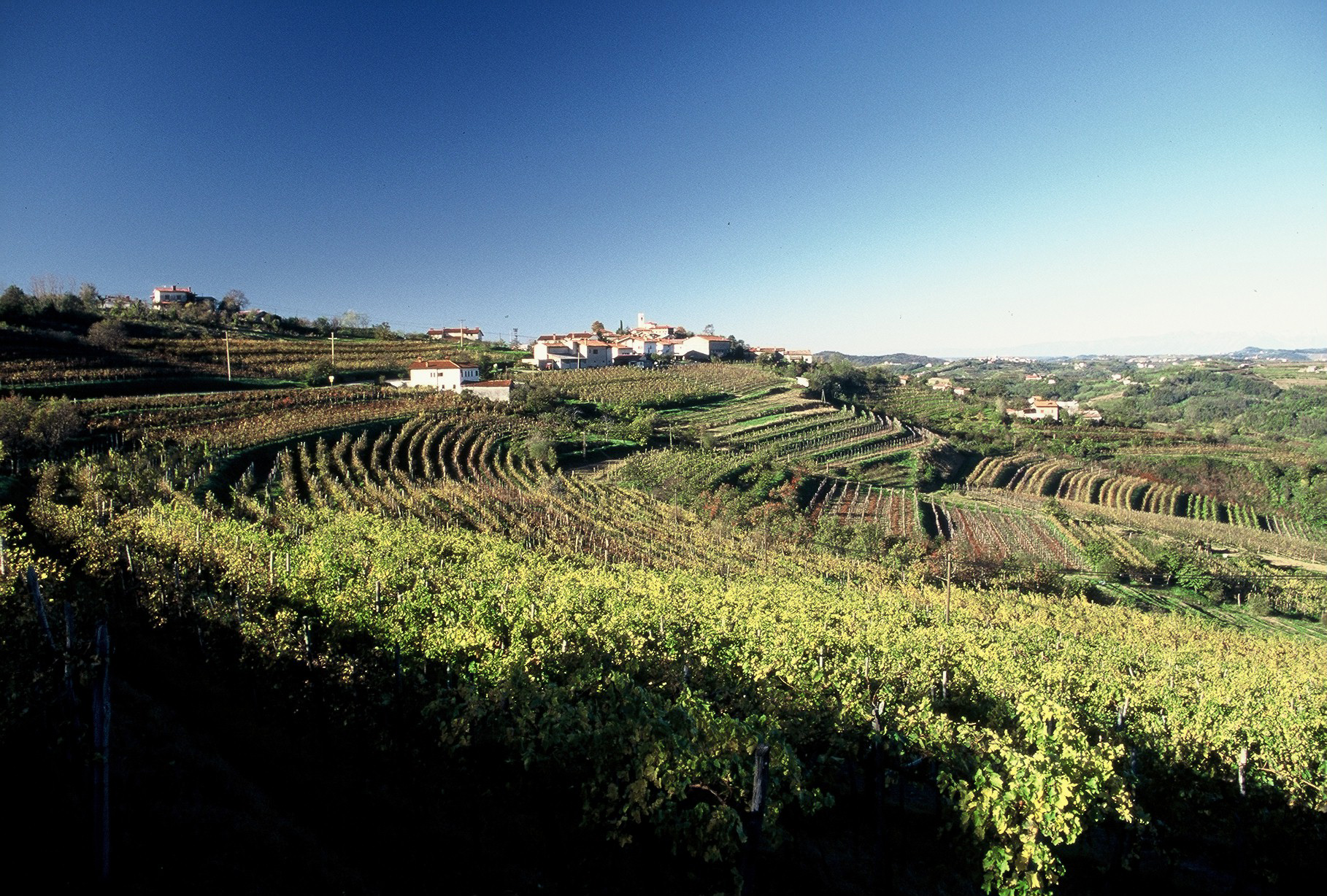 Marjan Simcic Vineyards | Photo Credit: Chris Boiling