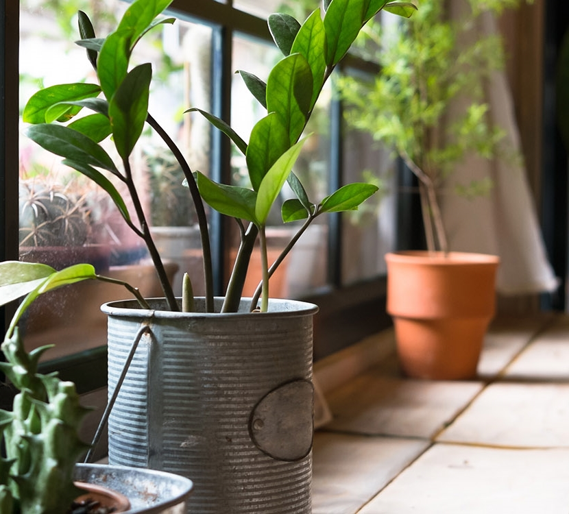 spectacular-spaces-home-interiors_0008_Dollarphotoclub_78815070-potted-plants-in-good-window-light.jpg