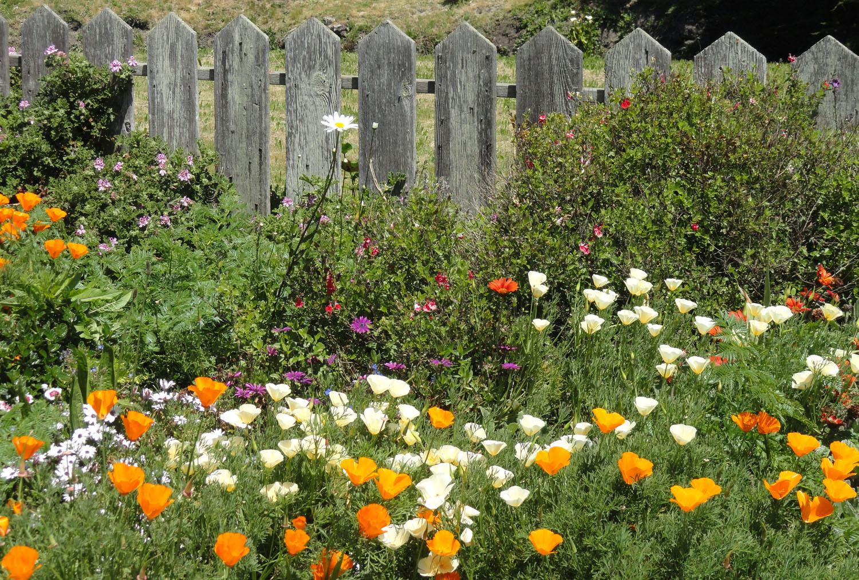 Field-of-spring-flowers.jpg