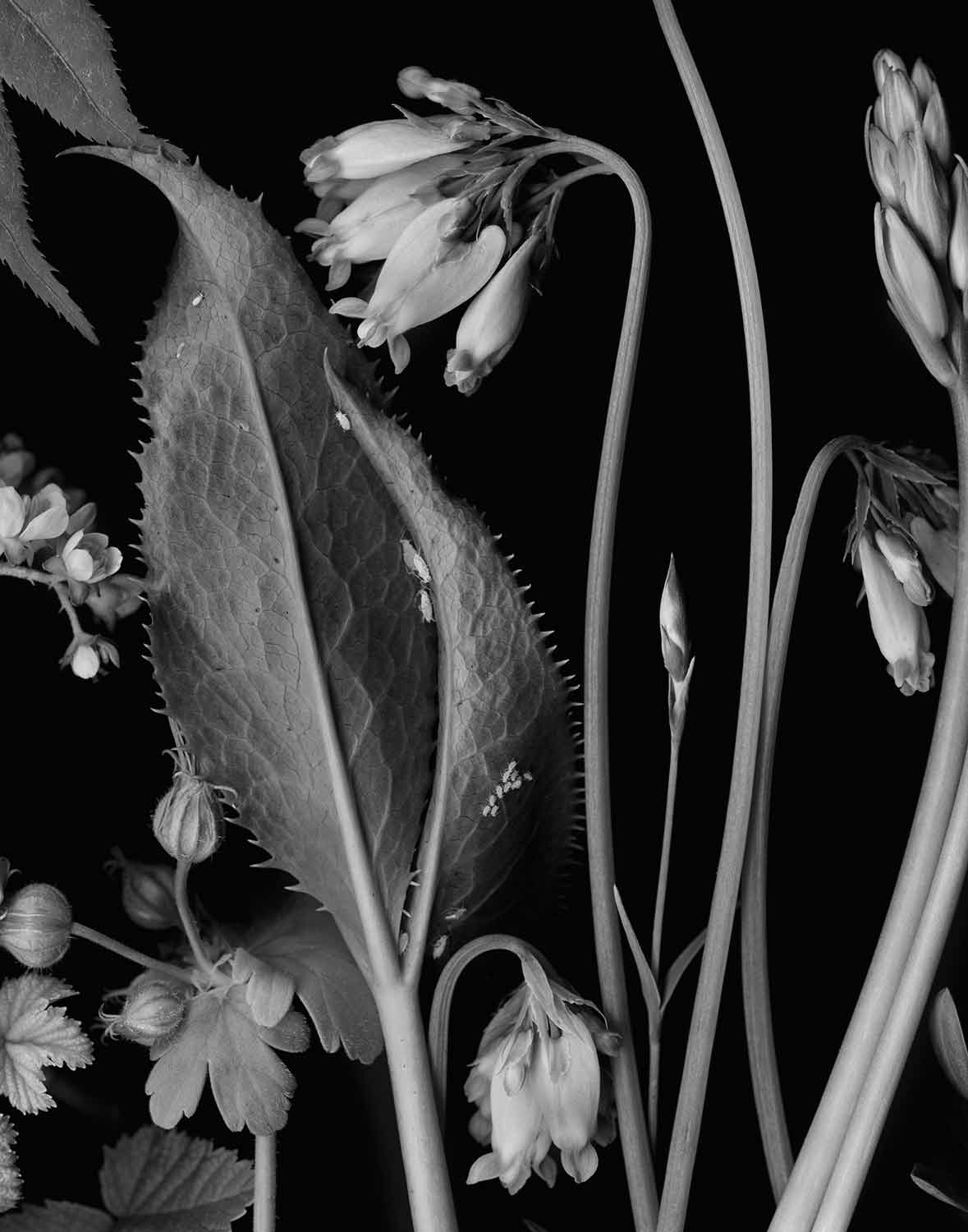 Blue Sky Gallery - My work was selected by juror Katherine Ware for the 2016 Northwest Photography Viewing Drawers, an exhibit of ten black and white works that will be available for viewing for one year. The theme that unifies this ten image edit is