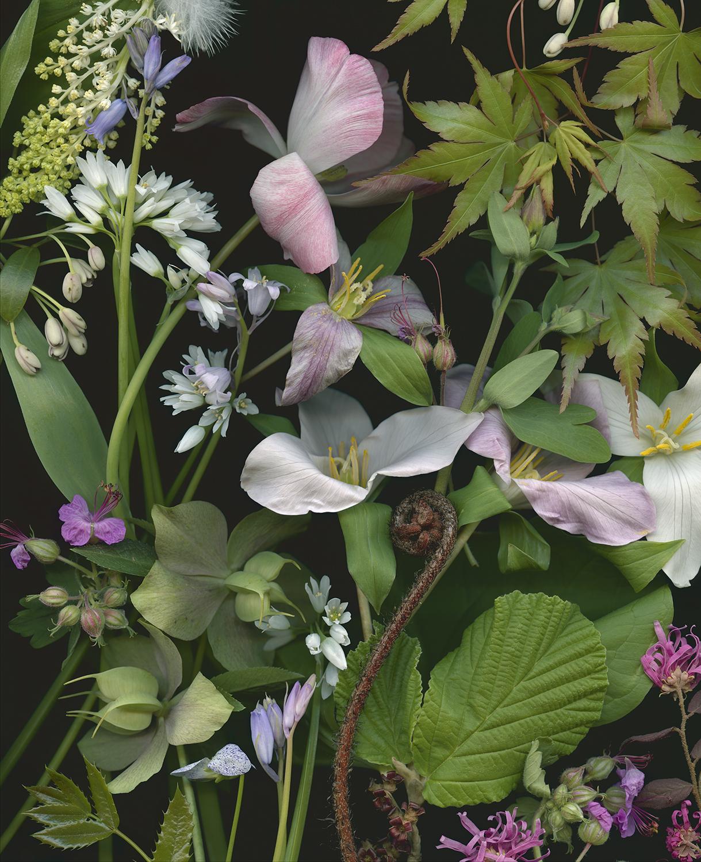 Tulip and Trillium