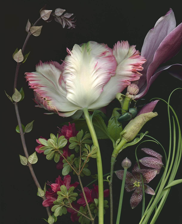 Tulip, Magnolia and Fritillaria