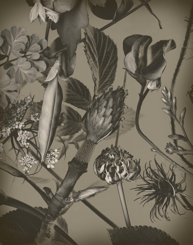 Copy of Peas, Magnolia and Garlic