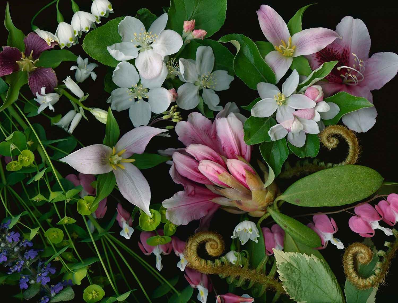 Trillium and Apple Blossoms