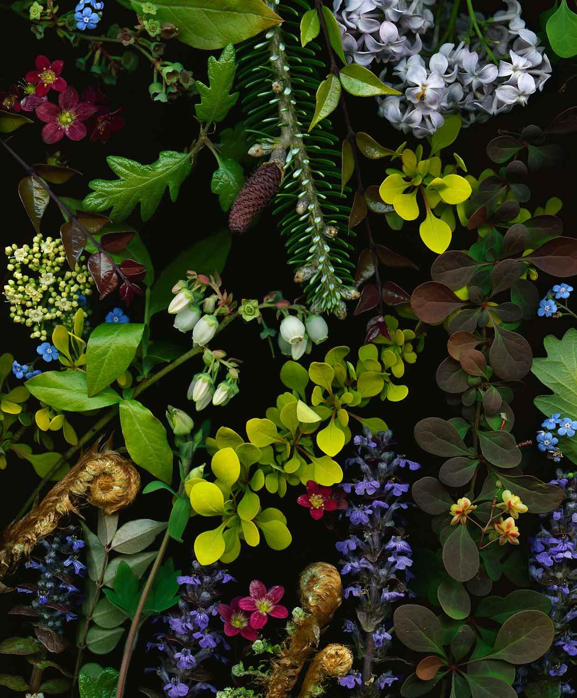 Lilacs and Oak