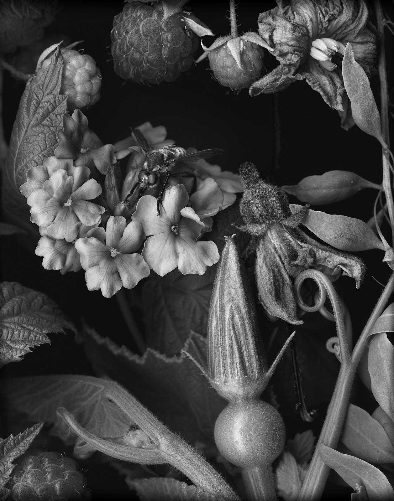 Squash and Raspberries