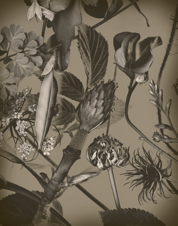 Peas, Magnolia and Garlic