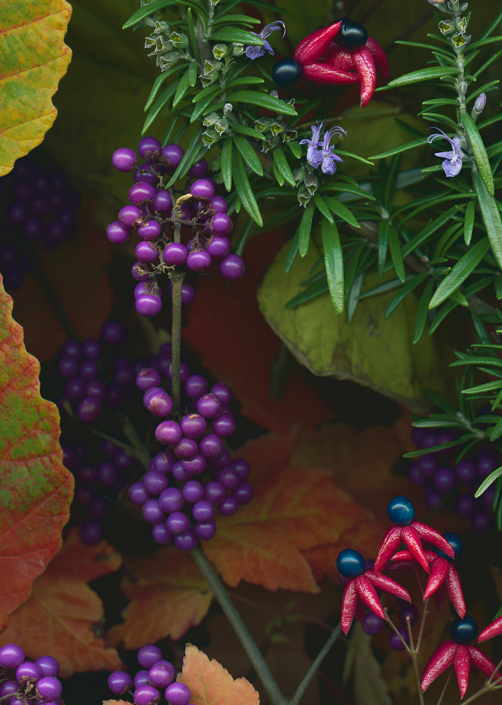 beauty-PB-fall031.jpg