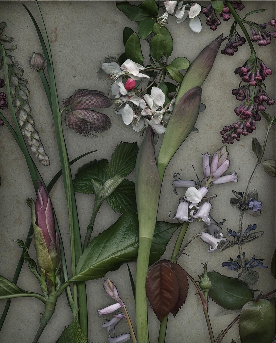 Iris, Magnolia and Fritillaria