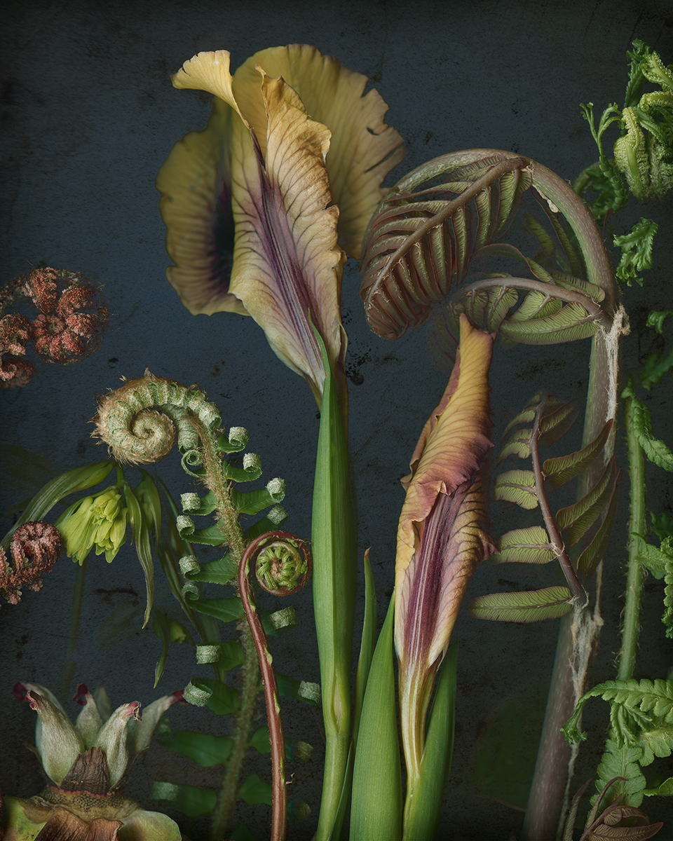 Two Irises, Some Ferns and Tree Peony