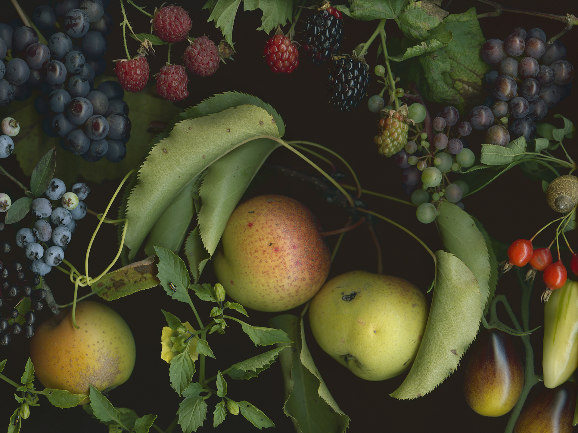 Blueberries, Blackberries, and Indigo Pear Drops