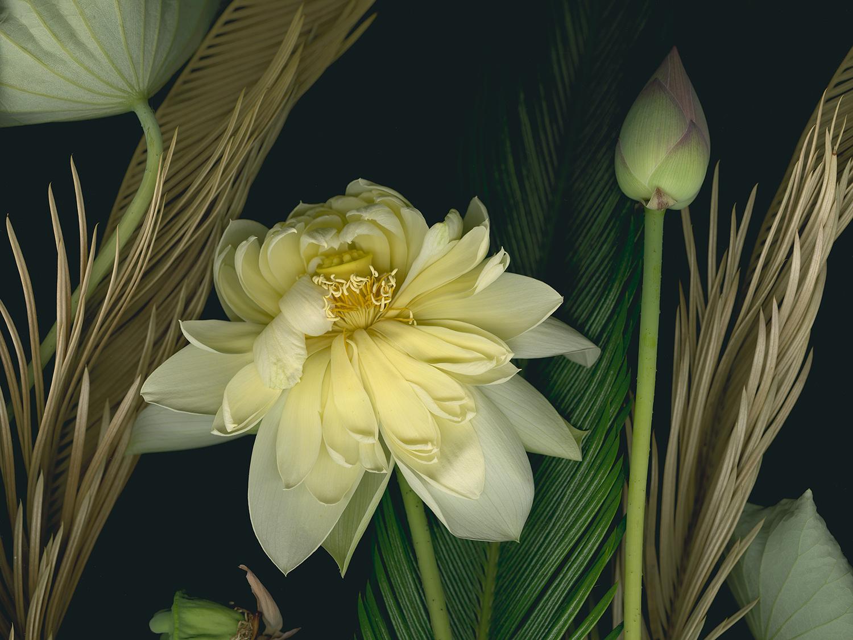 Lotus at the Lan Su Chinese Garden