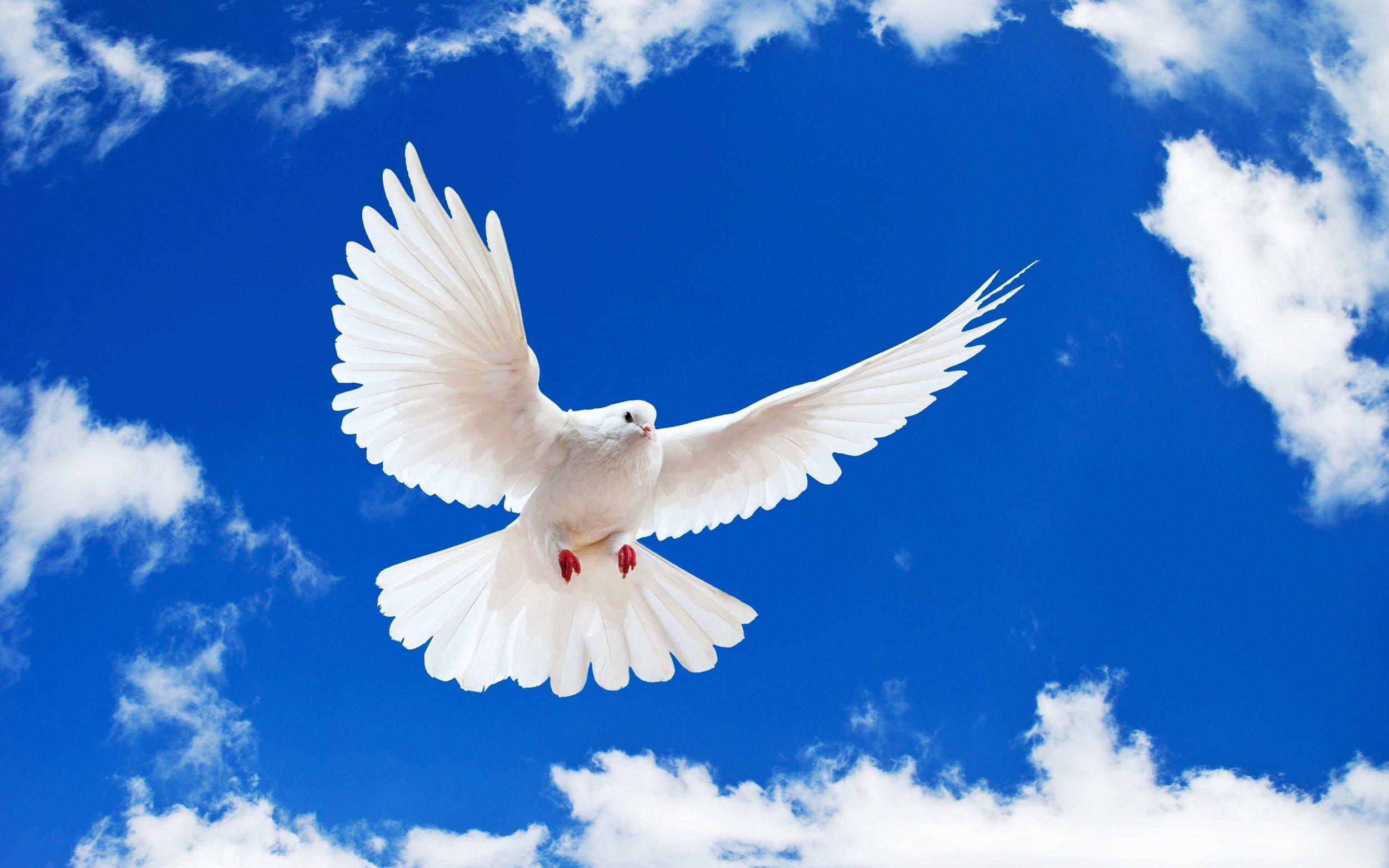 white-dove-holy-spirit.jpg