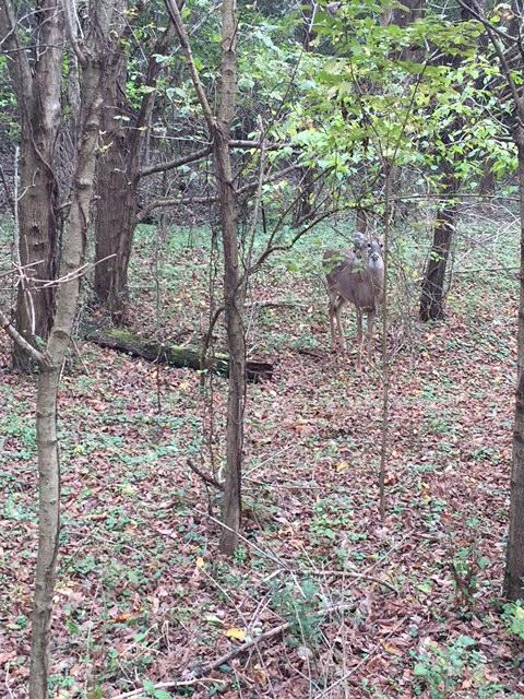 We made a buddy with a cute little deer